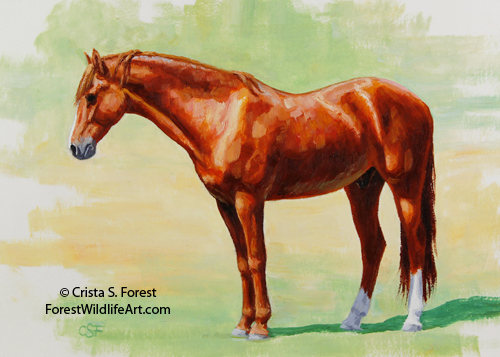 Oil painting of a chestnut Morgan horse basking in the sun by artist Crista Forest