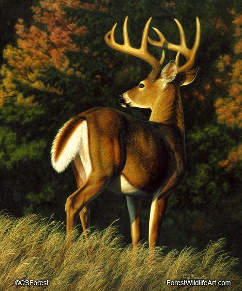whitetail buck oil painting by wildlife artist Crista Forest, ForestWildlifeArt.com. Fine Art Prints available