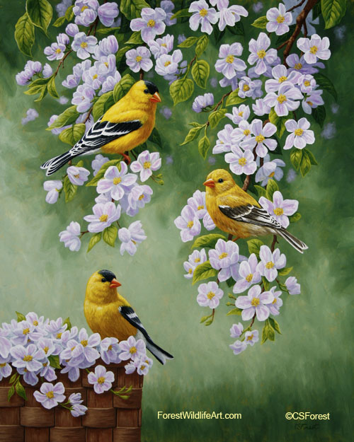 goldfinches and apple blossoms