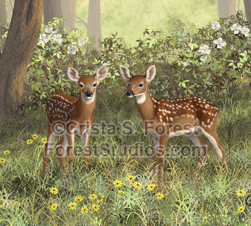 Whitetail Deer Twin Fawns
