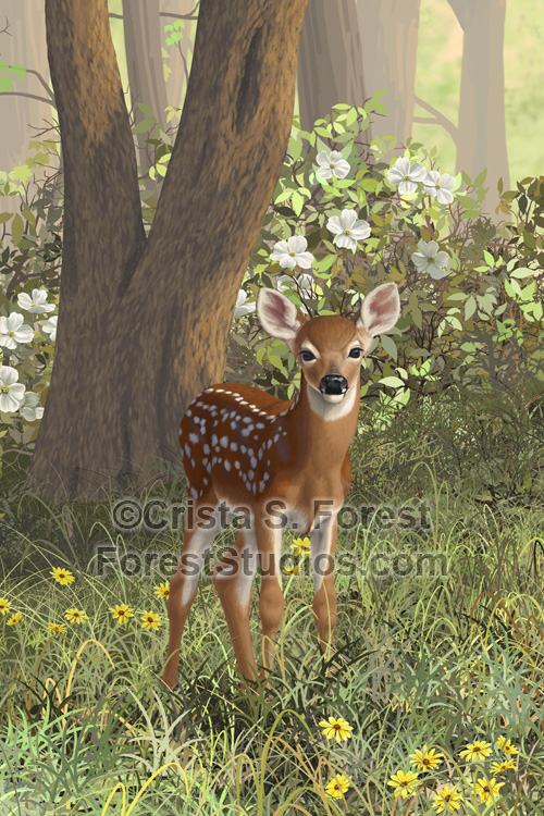Whitetail Fawn painting