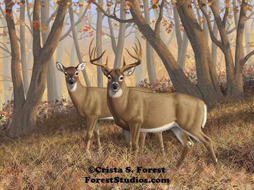 Fall Flame Whitetail Deer Painting