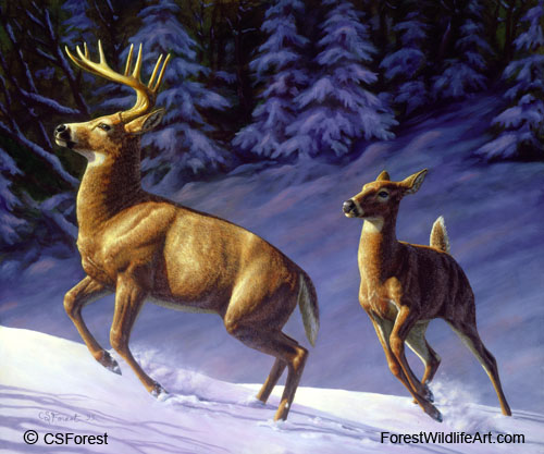 Forest Wildlife Art Whitetail