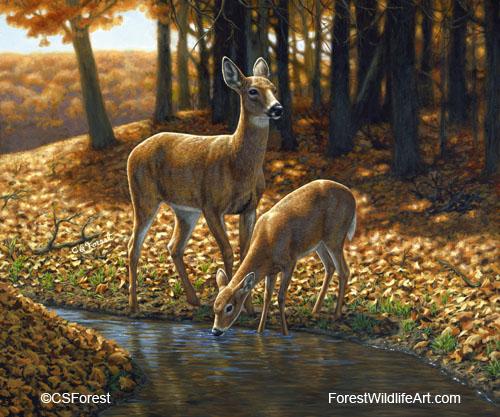 Forest Wildlife Art - Deer Oil Paintings Gallery