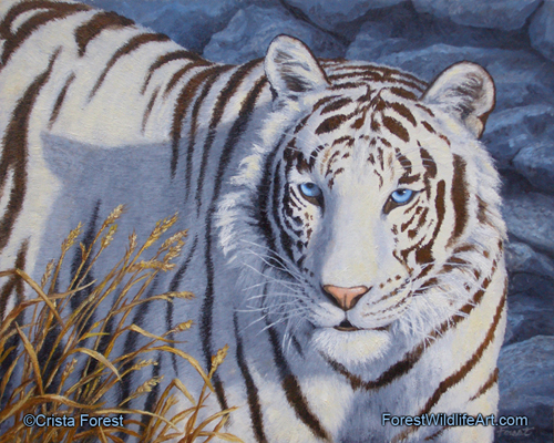 gallery for gt white tigers cubs with blue eyes